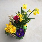 Invite Spring into your home